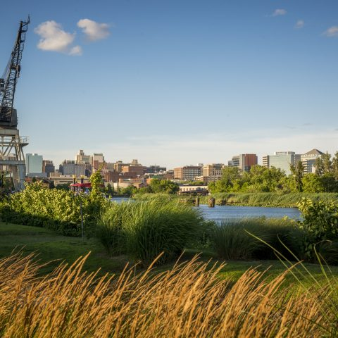 Tall grasses blowing in the wind beside river with city view in the distance
